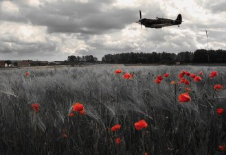 spitfire_poppy_fields_by_stephenjohnsmith-d8vyicj